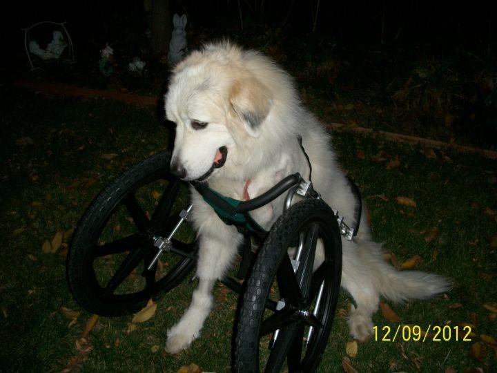 wheel chair 026