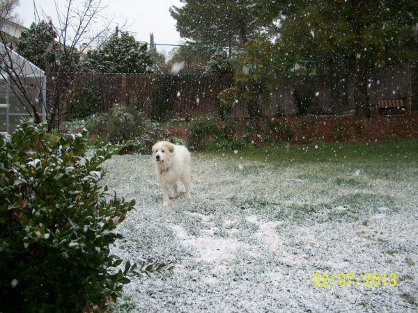 Feb snow 012