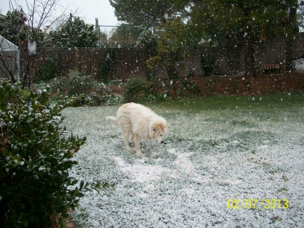 Feb snow 014