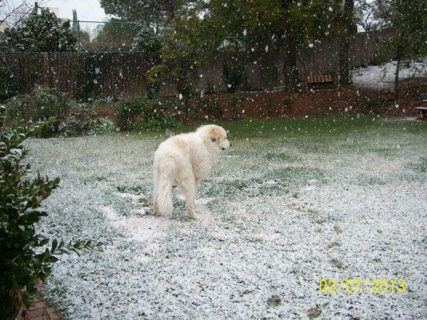 Feb snow 015