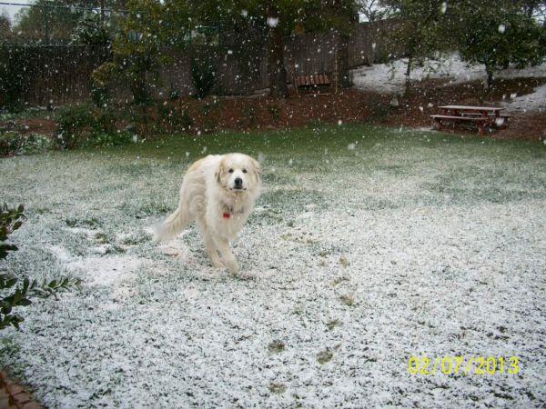 Feb snow 016