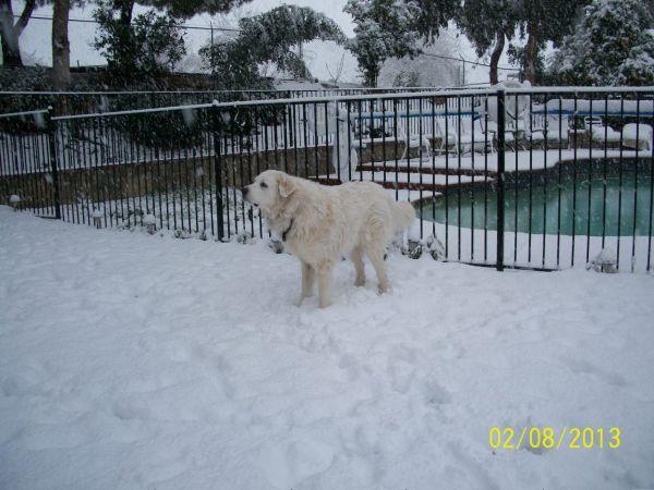 Feb snow 239