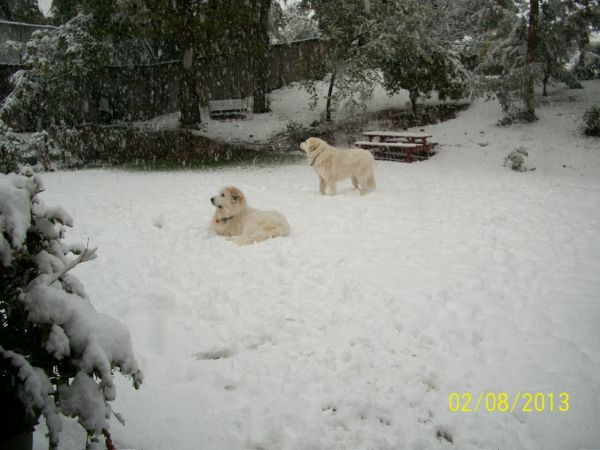 Feb snow 241