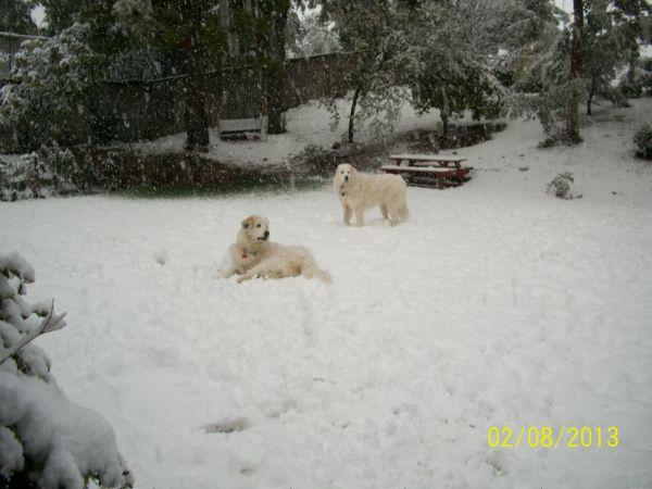 Feb snow 242