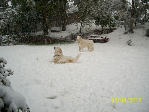 Feb snow 243