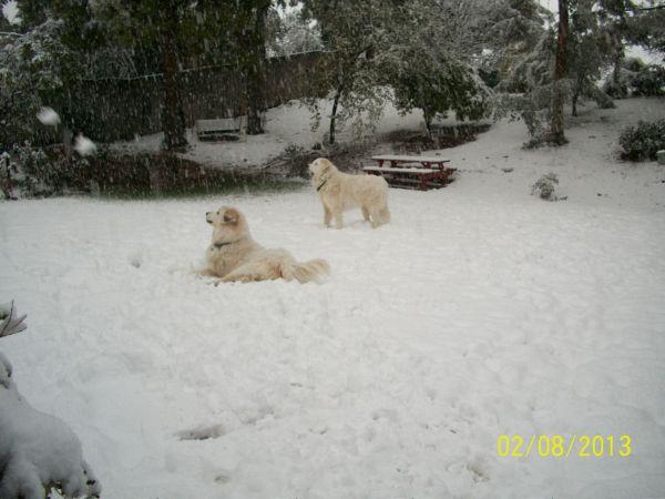 Feb snow 244