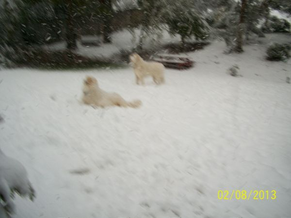 Feb snow 245