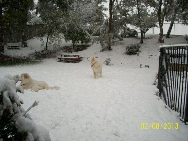 Feb snow 247