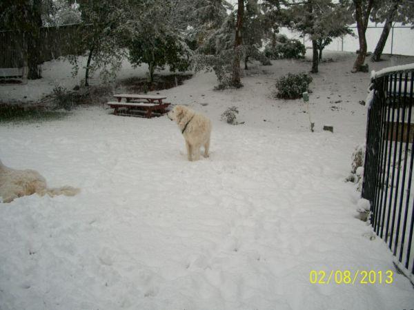 Feb snow 251
