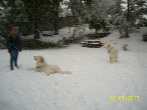 Feb snow 252