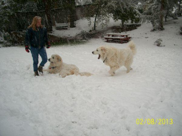 Feb snow 255