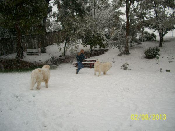 Feb snow 256