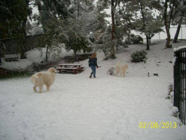 Feb snow 257
