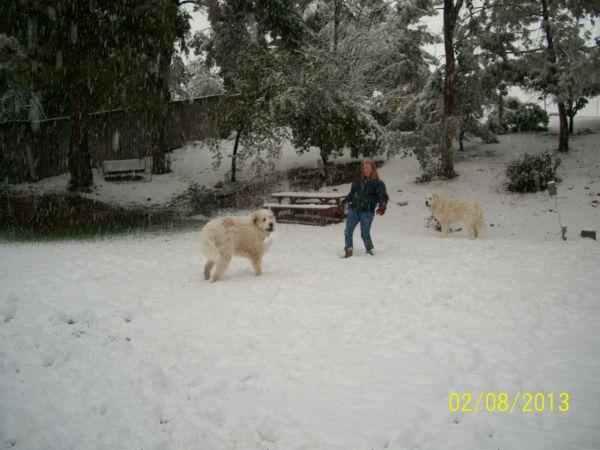 Feb snow 258