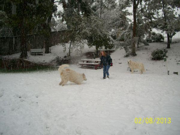 Feb snow 259