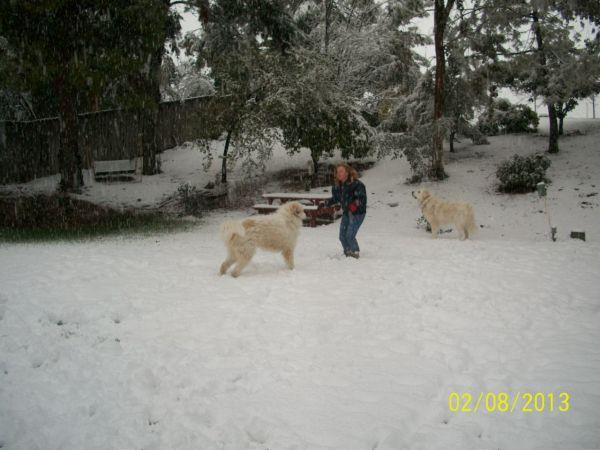 Feb snow 260