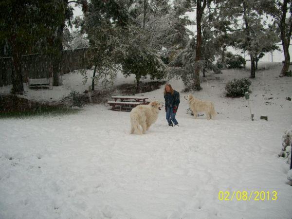Feb snow 261