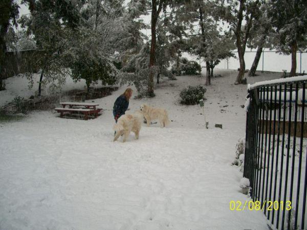 Feb snow 263